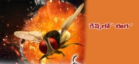 Eega is flying to Cannes. This Rajamouli directed blockbuster would be screened at Cannes Film Festival's market wing (Marché du Film.) to attract international distributors.